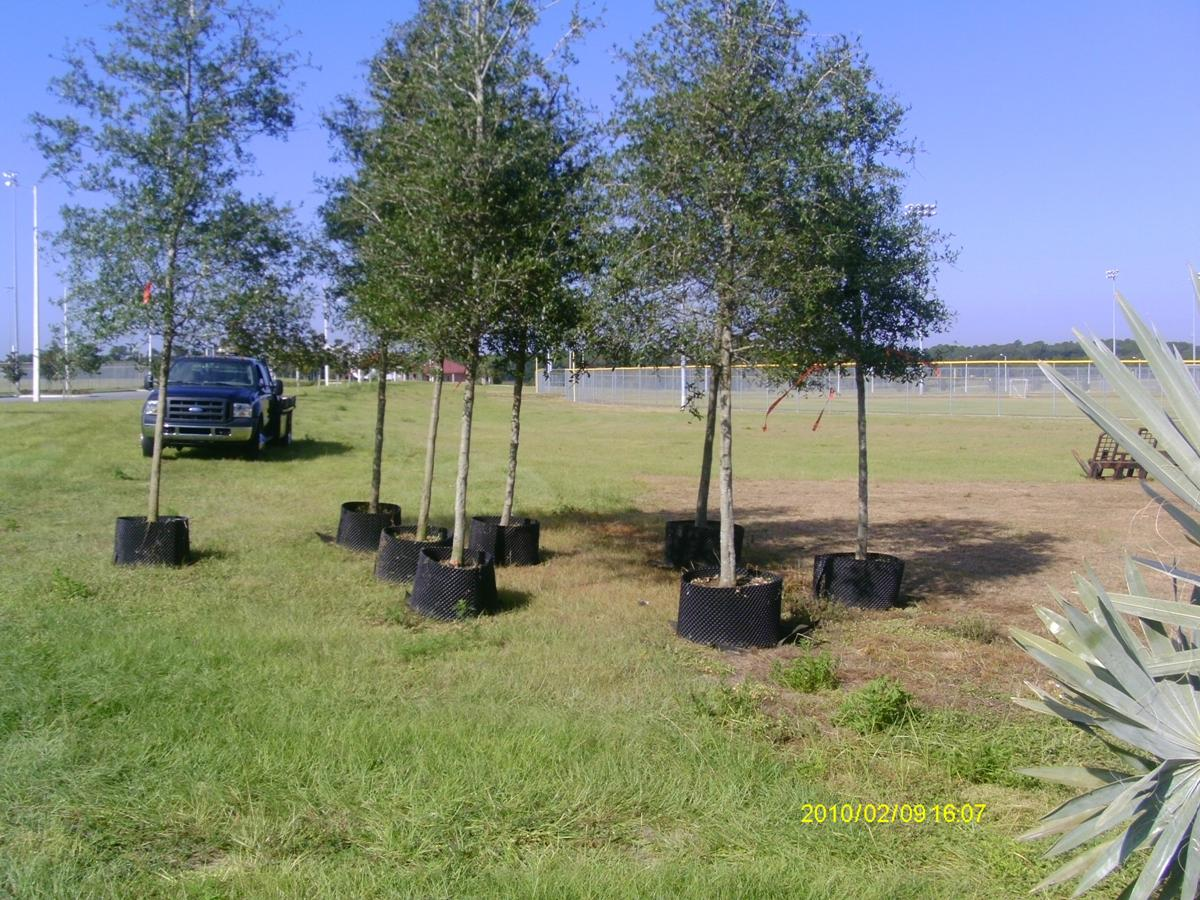 Trees being planted.
